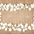 White flowers on burlap — Stock Photo