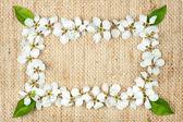 White flowers on burlap — Stock Photo