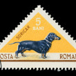 Stock Photo: Romanipost stamp