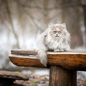 Cat on a bench — Stock Photo