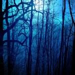 Dark forest — Stock Photo #8187943