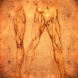 Leonardo da vinci style legs anatomy — Stock Photo