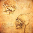 Leonardo dvinci skull illustration — Stock Photo #8313430