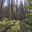Fisheye forest landscape — Stock Photo