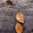 High quality frozen leaves close up outdoor — Stock Photo #8539729