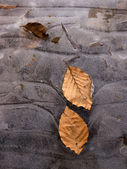 High quality frozen leaves close up outdoor — Stock Photo