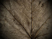 Dry leaf macro background — Stock Photo