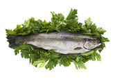 Fresh trout and parsley isolated in white — Stock Photo