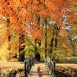 Herbst Landschaft Park bunt — Stock Photo