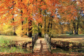 Landscape in fall autumn — Stock Photo