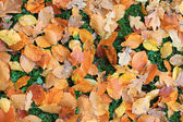 Colorful dead leaves — Stock Photo