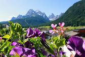 Flowers and village Sexten in the Dolomites — Stock Photo