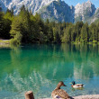 Lago di Fusine e monte Mangart with duck - Stock Photo