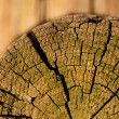 Close up of cut wood — Stock Photo