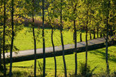 Italy - Udine - Countryside street at Rive D Arcano — Stock Photo