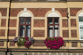A window with purple flowers in krakow, poland, europe — Stock Photo