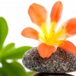 Stock Photo: Zen stones with flowers and green plant