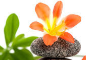 Zen stones with flowers and green plant — Stock Photo