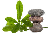 Spa stones with wet green plant on white. — Stock Photo