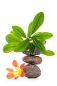 Zen stones with flower and green plant — Stock Photo