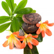 Stock Photo: Zen stones with three flowers and green plants in water drops