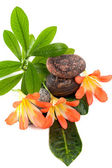 Zen stones with three flowers and green plants in water drops — Stock Photo