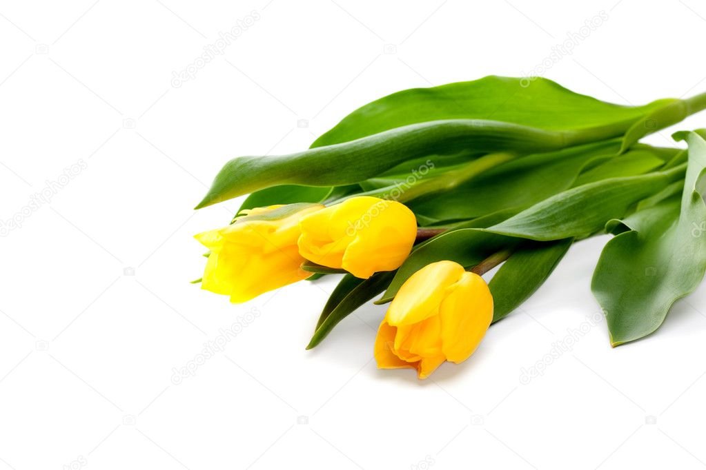 Bunch of beautiful yellow tulips on white background — 图库照片 #9160324