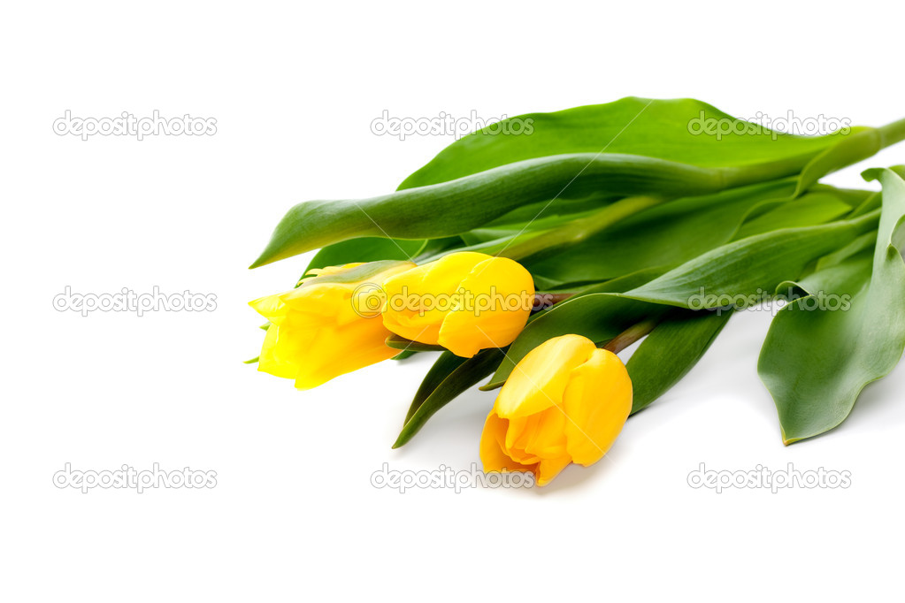 Bunch of beautiful yellow tulips on white background — Stockfoto #9160324