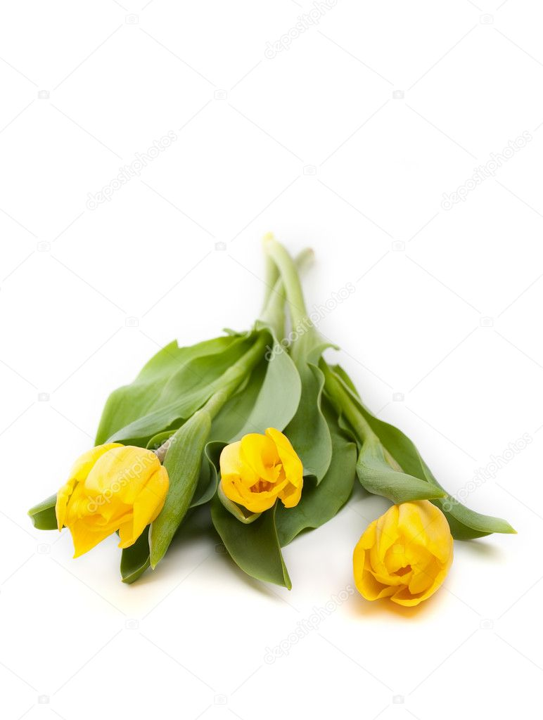 Bunch of beautiful yellow tulips on white background — Stock Photo #9160364