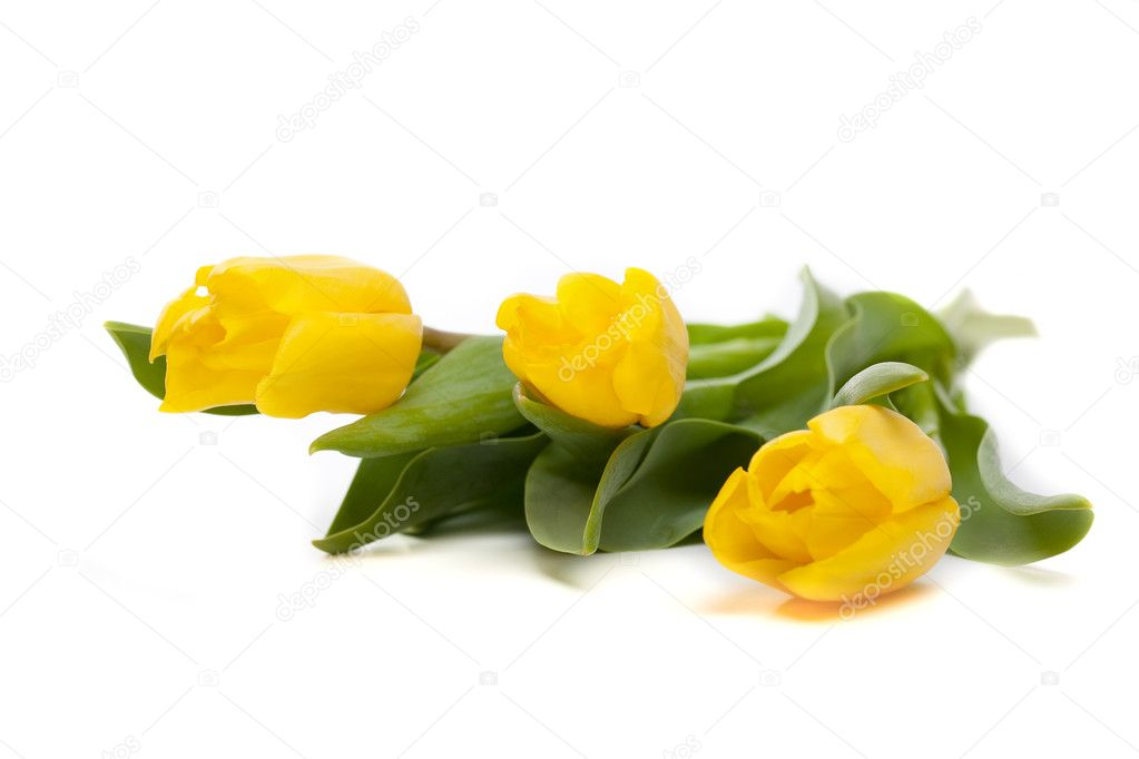 Bunch of beautiful yellow tulips on white background — Stock Photo #9160369