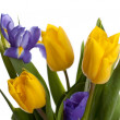 Bunch of beautiful yellow tulips and irises — Stockfoto #9314748
