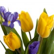 Bunch of beautiful yellow tulips and irises — Stockfoto