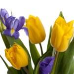 Bunch of beautiful yellow tulips and irises — Stock Photo