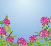 Background with clover flowers — Stock Vector
