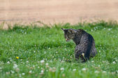 Curious domestic cat having a hunt for the mice. — Stock Photo