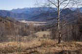 A white birch in mountains — Stock Photo