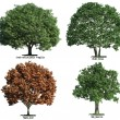 Set of trees isolated on white — Stock Photo