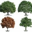 Set of trees isolated on white — Stock Photo