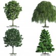 Set of trees isolated on white — Stock Photo #8197632