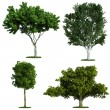 Set of four trees isolated against pure white — Stock Photo