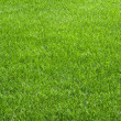 Afternoon Grass — Stock Photo