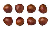 Chestnuts Isolated with clipping path — Stock Photo