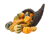 Cornucopia Gourds isolated with clipping path — Stock Photo