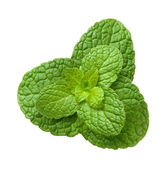 Mint Leaves isolated on a white background — Stock Photo