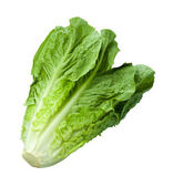 Romain Lettuce isolated on white — Stock Photo
