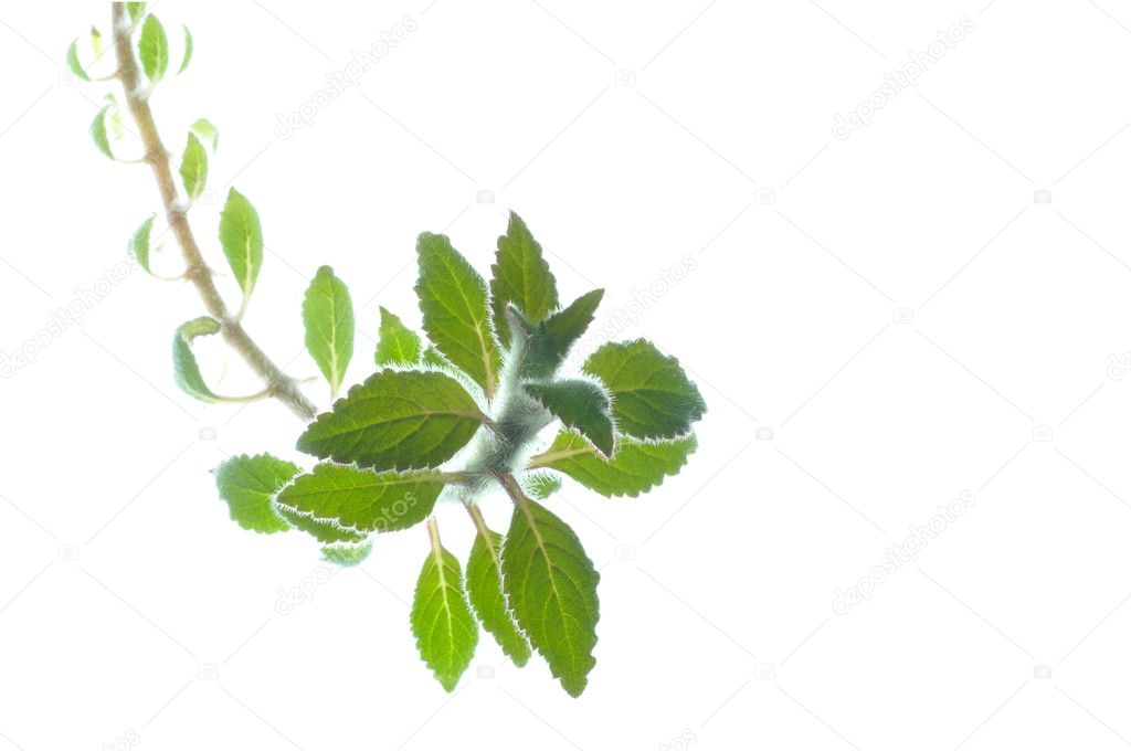 Green leaves background with copy space — Stock Photo #9333374