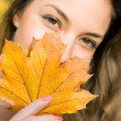Autumn leaf peek-a-boo. — Stock Photo