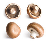 Fresh champignons isolated on white background. — Stock Photo