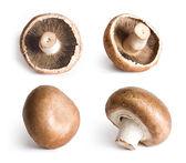 Fresh champignons isolated on white background. — Stock Photo