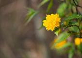 Fresh spring flowers groving thru fence. — Stock Photo